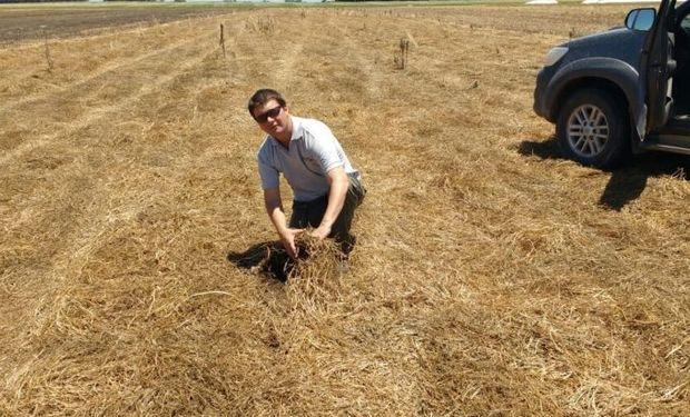 Impactos agronómicos y económicos de producir sin glifosato.
