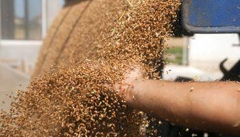 El precio de los granos aguarda datos claves de un informe que se publicará el viernes