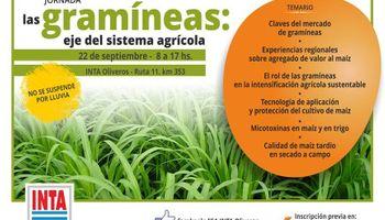 Las gramíneas: eje del sistema agrícola