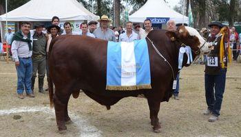 Los Grandes Campeones Machos de ExpoBRA 2015