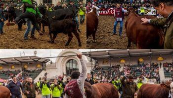 Los Grandes Campeones de La Rural en imágenes