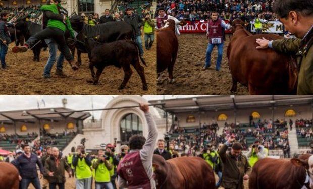 Los Grandes Campeones consagrados en La Rural.