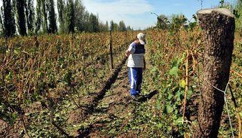 Declaran emergencia agropecuaria en 3 provincias