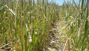 El seguro de granizo como aliado del productor ante los vaivenes del clima