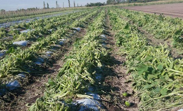 Subsidiarán aportes a productores hortícolas afectados por el granizo.