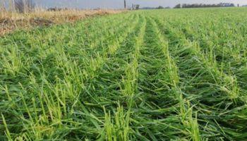 """Granizo en Pergamino: la """"tormenta perfecta"""" arrasó con 12 mil hectáreas de trigo"""