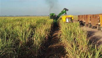 Ingenios azucareros garantizaron el abastecimiento de alcohol a precios preferenciales