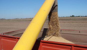 El PBI de la soja caerá un 26%