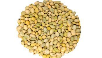 Grano verde en soja: claves para elegir los lotes que se usarán como semilla en la próxima campaña