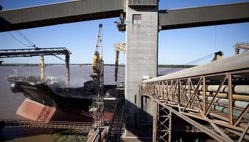 Senasa actualizó el protocolo para prevenir la presencia de granos coloreados en la exportación e industria