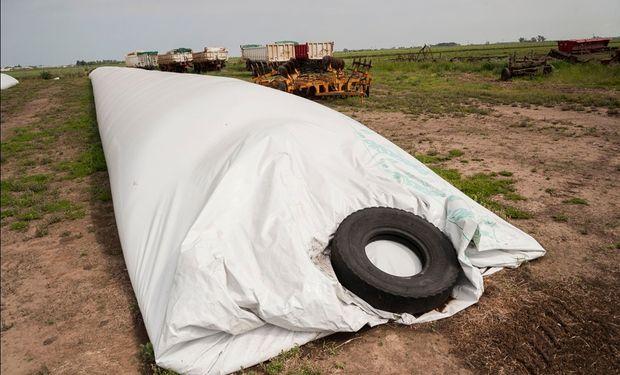 En la zona de Armstrong toneladas de soja esperan en los campos.