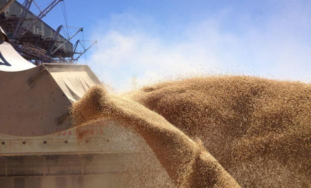 El maíz y el trigo argentinos son los granos más buscados por los compradores.