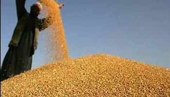 Vence el plazo para declarar la superficie destinada a cultivos de verano