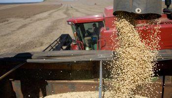 """""""Es muy probable que entren a los campos y decomisen los granos"""", adelantó la Rural"""