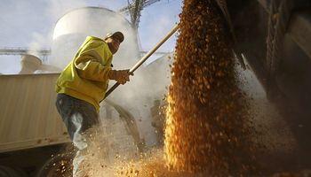 Factores de tinte bajista sobre los granos