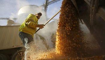 Aparecen pisos en el mercado de granos