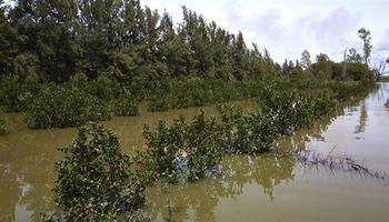 Graves daños a la producción por las inundaciones