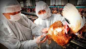 Japón: alerta por gripe aviar tras hallar el virus en un ave en Tokio