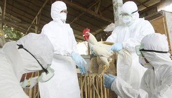Preocupa foco de gripe aviar en Estados Unidos