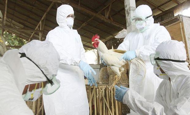 Según el USDA, casi 8 millones de aves (pollos y pavos) podrían estar afectados por el virus H5N2, cuya mortalidad es del 90%.