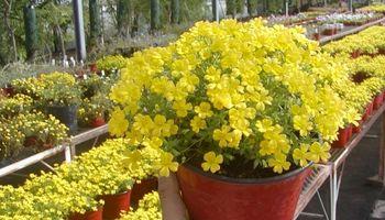 Plantas y flores, cada vez más protagonistas de la ciudad
