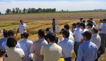 El trigo se adapta y coloniza la región Centro