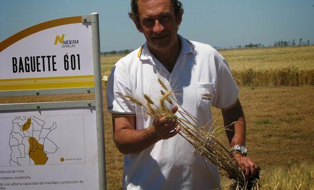 Gustavo Vrdoljak, gerente del Programa de Mejoramiento de Trigo en Nidera, remarcó la importancia de elegir en forma correcta la variedad a sembrar en cada caso.