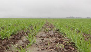 El cuidado de los suelos, en lucha constante contra la degradación