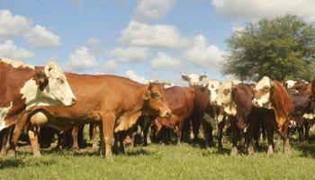 La ganadería tiene futuro