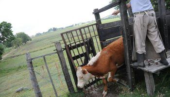 Uruguay pide a veterinarios extremar medidas por Etión