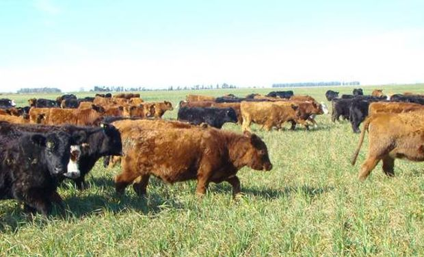 La actividad crecerá en los próximos años alentada por un aumento en el consumo global de carnes.