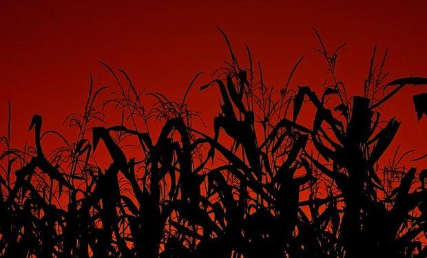 Exportaciones argentinas declaradas de harina de maíz a granel fueron las más baja de la última década.