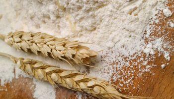 La molinería busca ampliar la capacidad productiva a 20Mt de trigo