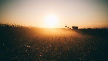 El maíz volvió a caer en Chicago y alcanzó niveles mínimos de tres semanas