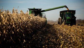 El USDA confirmó una supercosecha de maíz: seguí el impacto en los precios