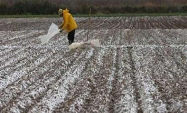 Preocupan las heladas y la escasez de lluvias en el norte de Santa Fe