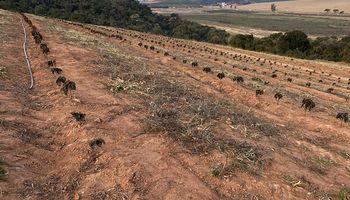 Brasil: la drástica decisión de productores que podría afectar a consumidores de todo el mundo