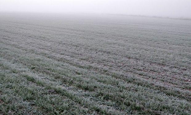 Más allá de las zonas que reportan heladas, el frío alcanzó las zonas mediterráneas del NEA, donde las mínimas quedaron cerca de cero grado.