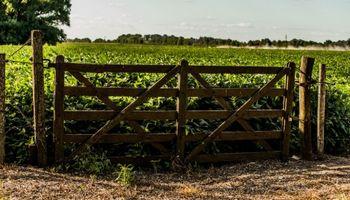 Estiman que los precios de los campos cayeron un 10% durante el primer semestre