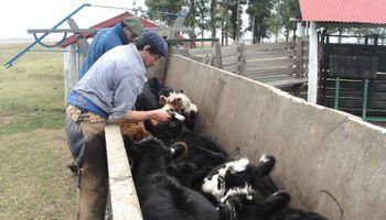 El INTA desarrolló una vacuna de ADN contra herpes bovino