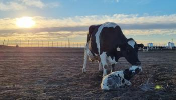 #DesafíoTambero: la inspiradora historia detrás de la iniciativa que sumó kilómetros (y litros de leche)