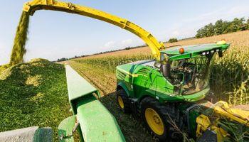 Cómo picar y ensilar los maíces que están golpeados por el intenso calor
