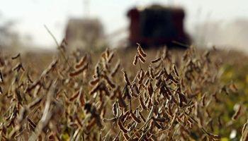 Científicos buscan anticipar variaciones de la soja en un concurso que ya tiene 25 proyectos