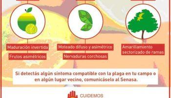 El Senasa detectó tres casos positivos de HLB en Formosa y Chaco
