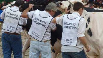 La Rural apenas tendrá 7 animales de la raza Holando contra 62 del año pasado