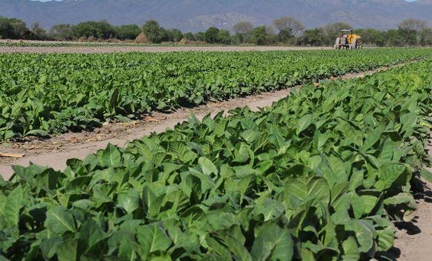 """Productores de tabaco están """"en jaque"""" por el parate de la producción de cigarrillos"""