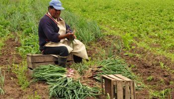 Economías regionales: las hortalizas en situación crítica por costos altos y precios bajos