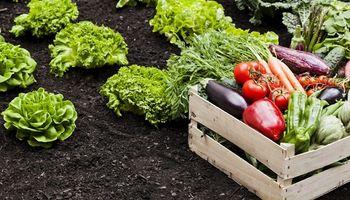 La horticultura, ante el reto de aumentar el consumo y la exportación
