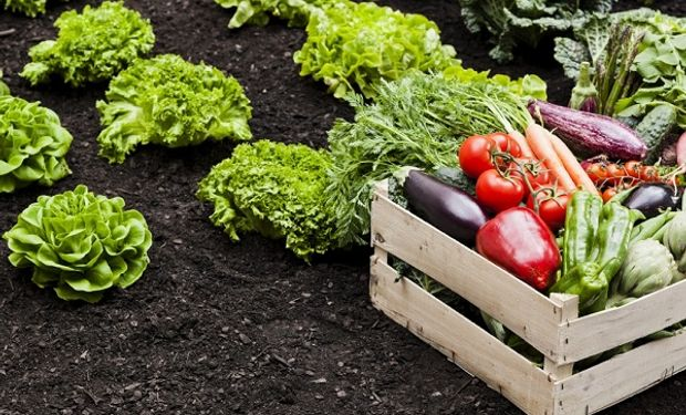 Se destinan 600 mil hectáreas a la horticultura.