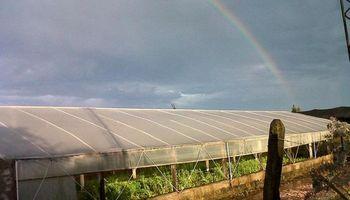Lanzan línea de créditos para horticultores afectados por fenómenos climáticos